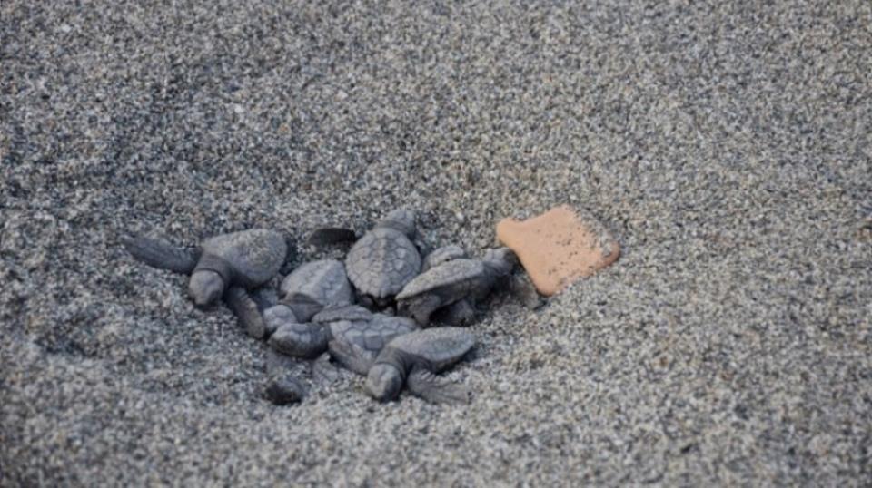 le tartarughe sulla spiaggia del villaggio